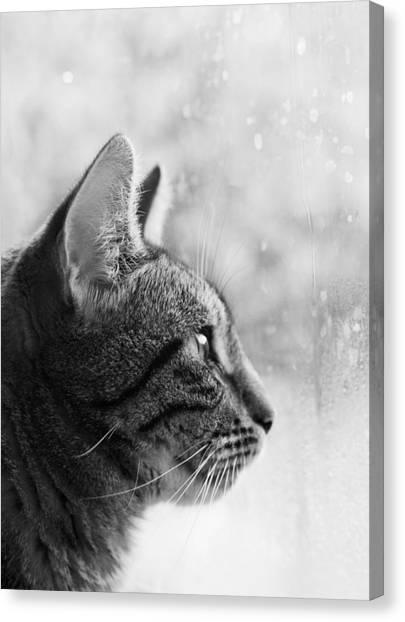 Canvas Print featuring the photograph November Rain by Helga Novelli