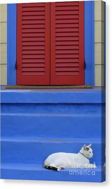 Cat On Blue Steps Canvas Print