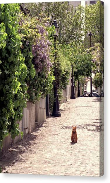Cat On Cobblestone Canvas Print