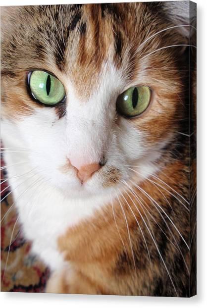 Cat Portrait Canvas Print by Valia Bradshaw