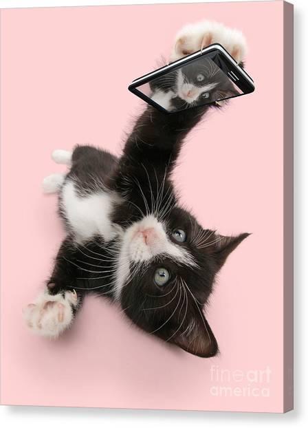 Cat Selfie Canvas Print