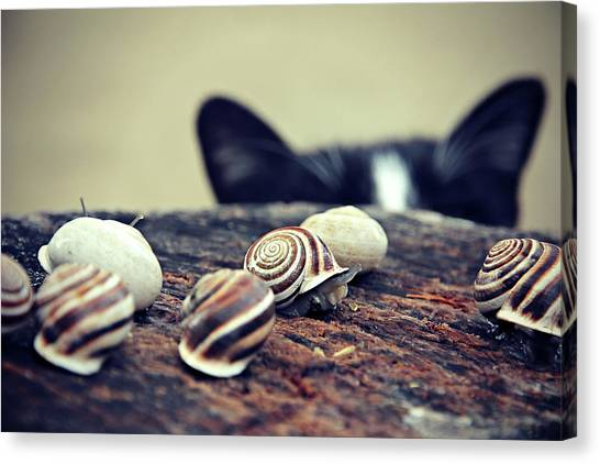 Cat Snails Canvas Print