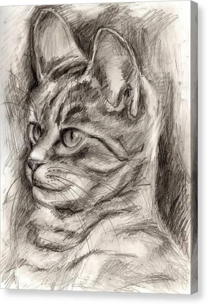 Cat Study Drawing No Three Canvas Print
