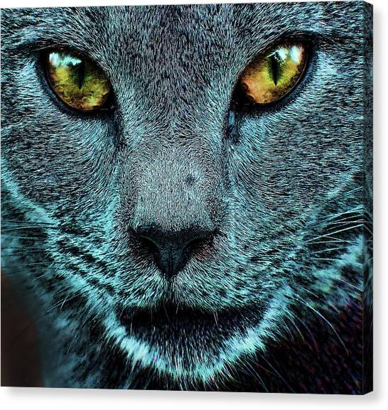 Cat With Golden Eyes Canvas Print