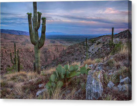 Catalina Mountains Color Sunset Canvas Print