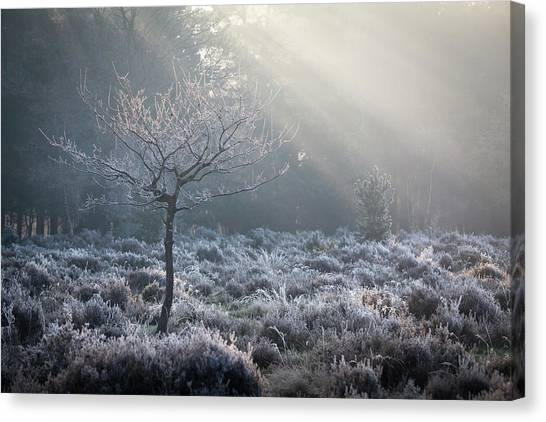 Sherwood Forest Canvas Print - Catching Rays by Chris Dale