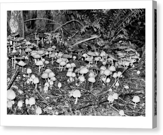 Caterpillars Playground 1 Canvas Print by J D Banks