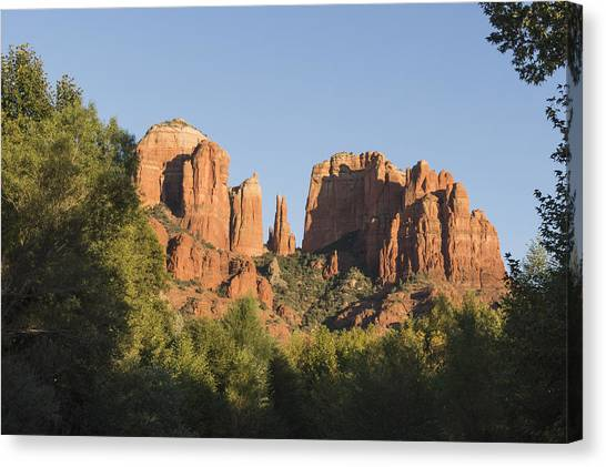 Cathedral In The Trees Canvas Print
