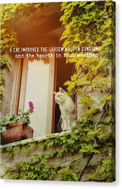 Cats Eye View Quote Canvas Print by JAMART Photography