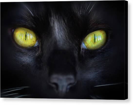 Cat's Eyes Canvas Print