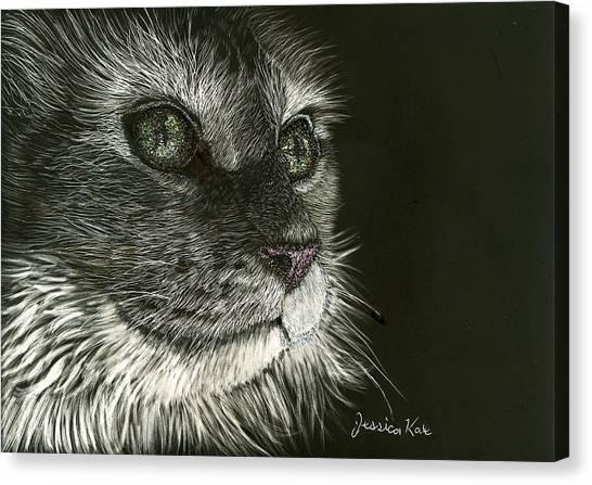 Cat's Gaze Canvas Print by Jessica Kale