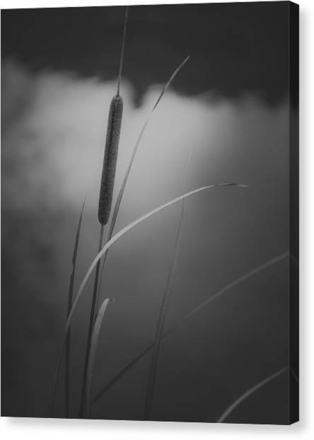 Verde Canvas Print - Cattail by Joseph Smith
