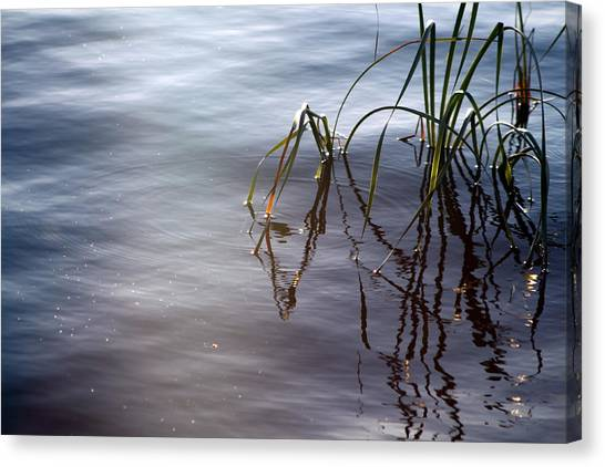 Canvas Print - Cattails by Evelyn Patrick