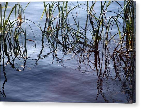 Canvas Print - Cattails1 by Evelyn Patrick