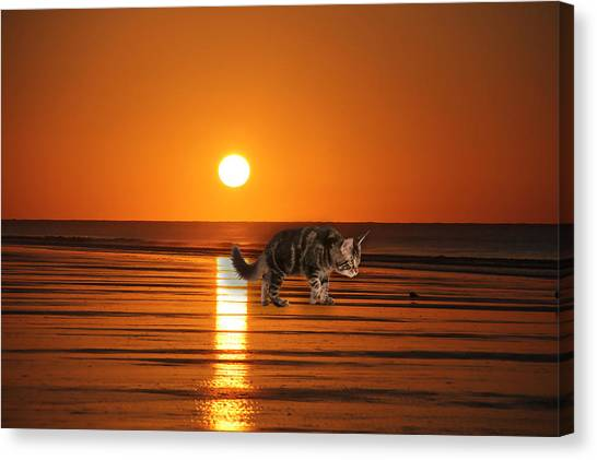 Canvas Print - Cattin Fripp Island by Cynthia Leaphart
