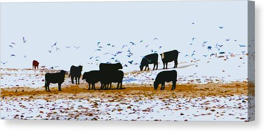 Cattle And Birds Canvas Print