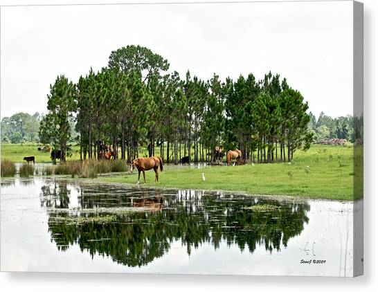 Cattle And Horse Ranch In Florida Canvas Print