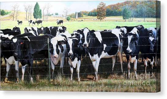 Cattle Call Canvas Print