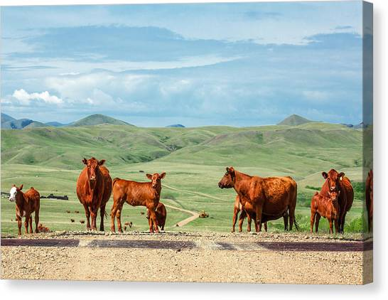 Cattle Guards Canvas Print