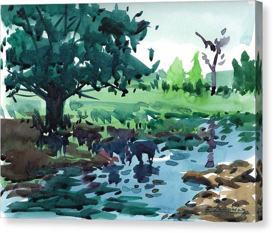 Cattle In The River Canvas Print