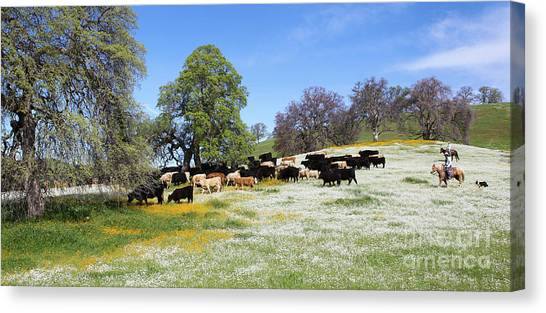 Cattle N Flowers Canvas Print