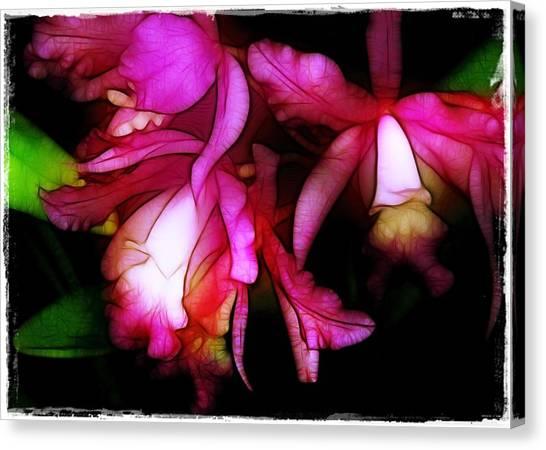 Cattleyas Canvas Print