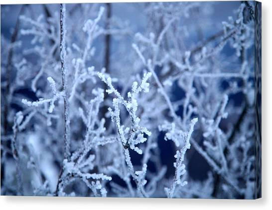 Caught In The Ice Canvas Print by Jennilyn Benedicto