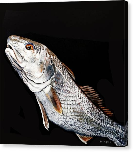 Caught In The Surf Redfish Canvas Print