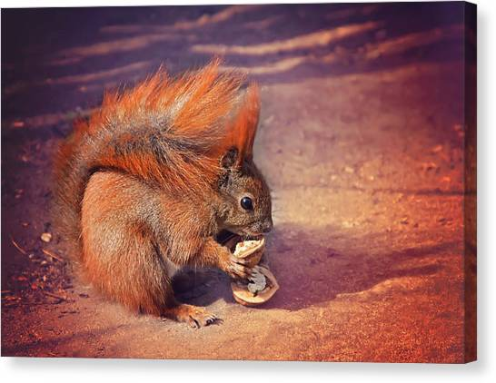 Squirrel Canvas Print - Caught Red Handed by Carol Japp