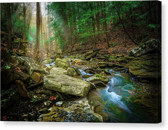 Cave Branch #9 Canvas Print