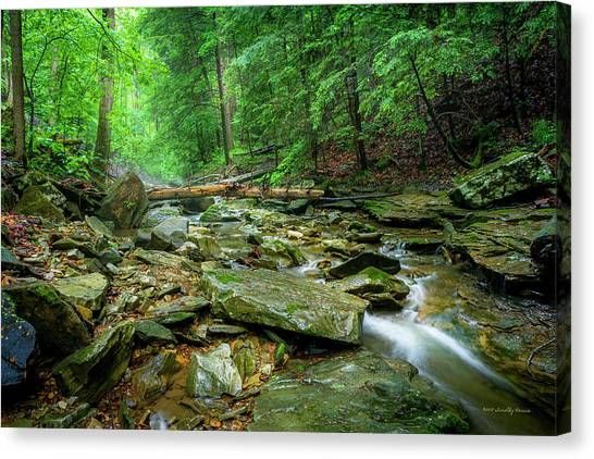 Cave Branch After A Spring Shower Canvas Print