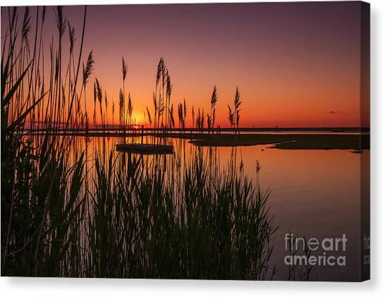 Cedar Beach Sunset In The Reeds Canvas Print