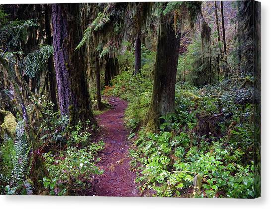 Canvas Print featuring the photograph Cedar Creek Trail #3 by Ben Upham III