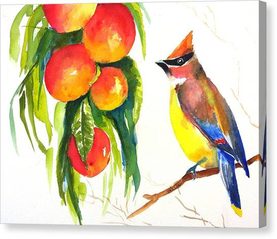 Cedar Waxwing Canvas Print - Cedar Waxwing And Elberta Peaches by Carlin Blahnik CarlinArtWatercolor
