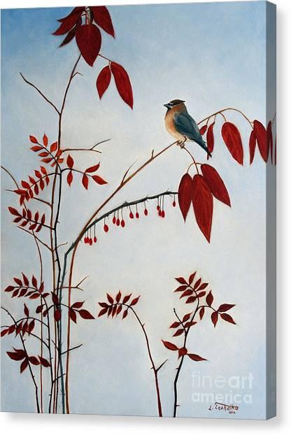 Cedar Waxing Canvas Print - Cedar Waxwing by Laura Tasheiko