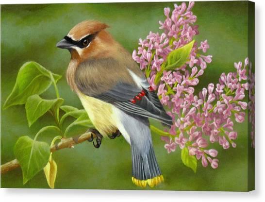 Cedar Waxwing Canvas Print - Cedar Waxwing On Lilac by Karen Coombes