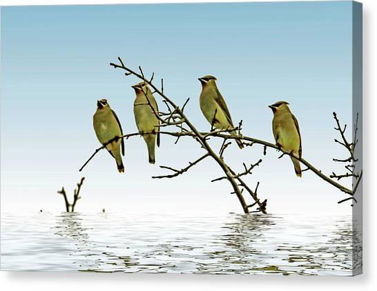 Cedar Waxing Canvas Print - Cedar Waxwings On A Branch by Geraldine Scull