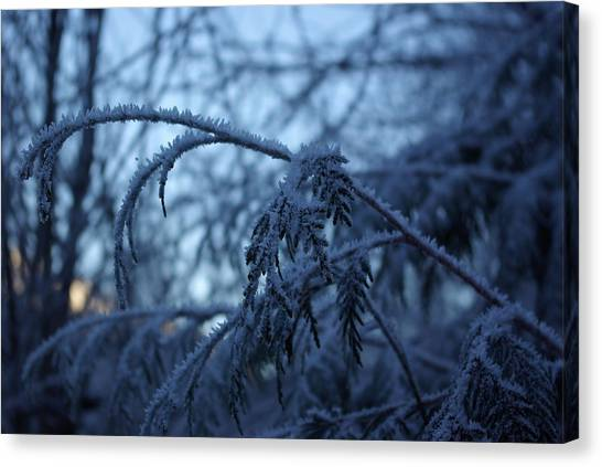 Cedars Of Ice Canvas Print