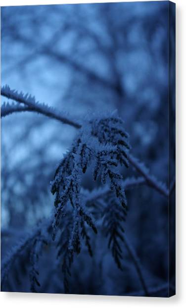 Cedars Of Ice II Canvas Print