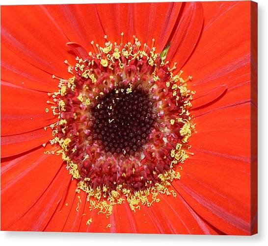 Center Seeds Canvas Print