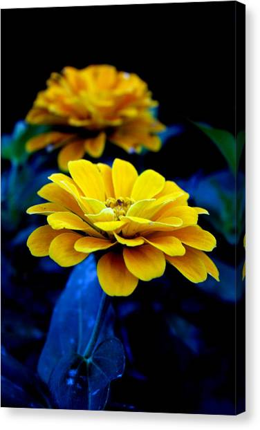 Center Stage Canvas Print by Alexandra Harrell