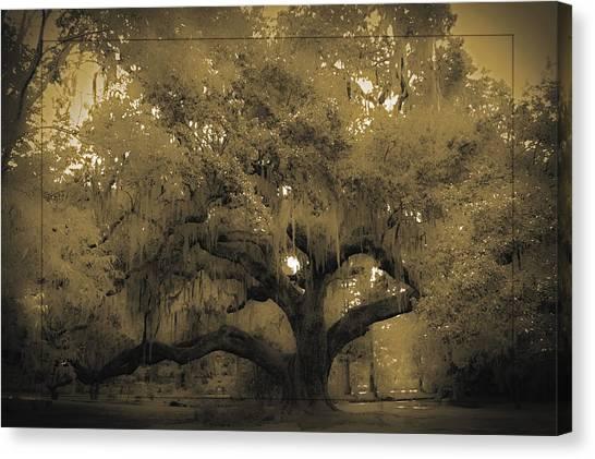 Centurion Oak Canvas Print