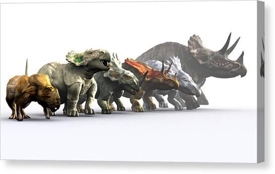 Ceratopsian Dinosaurs Canvas Print by Christian Darkin