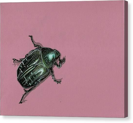 Chaf Beetle Canvas Print