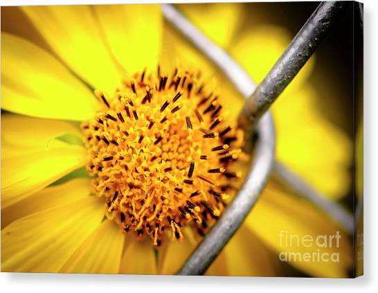 Chain Link Fence Canvas Print - Chain Of Love by Charles Dobbs