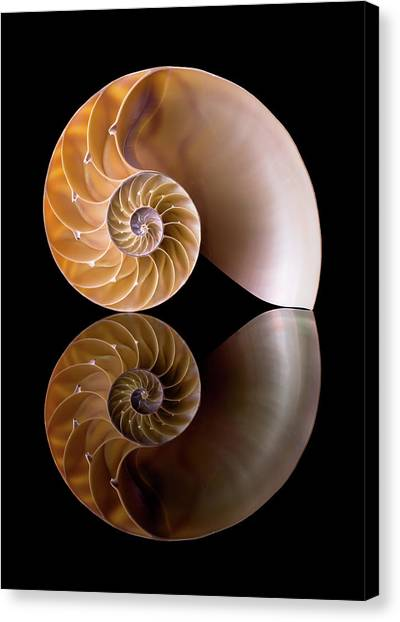 Biology Canvas Print - Chambered Nautilus by Jim Hughes