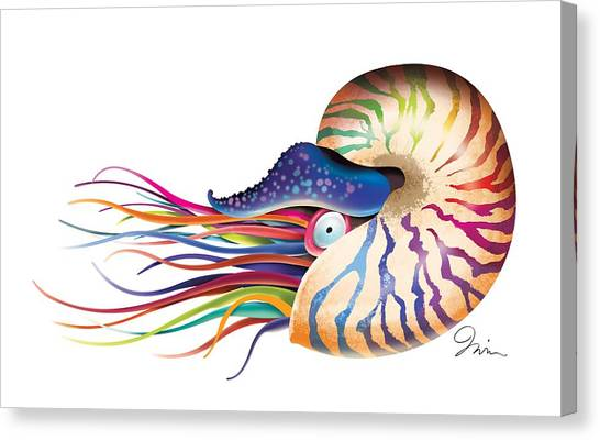 Shrimping Canvas Print - Chambered Nautilus On White by Trevor Irvin