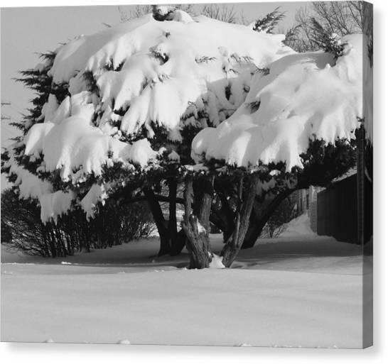 Chance Of Snow Canvas Print by Nicholas J Mast