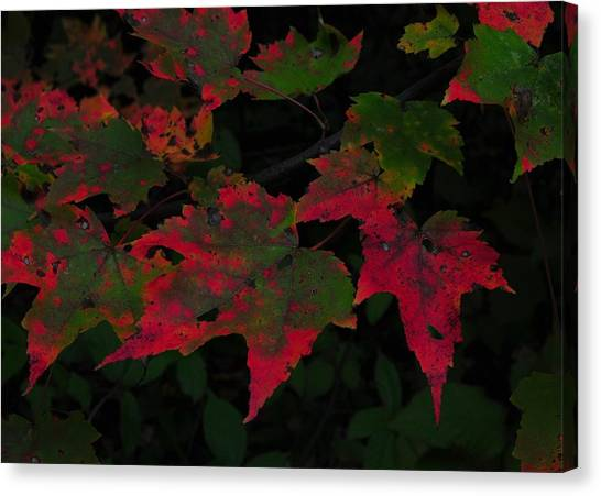 Changing Color Canvas Print by JAMART Photography