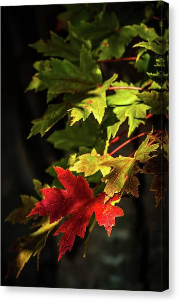 Canvas Print - Changing by Elijah Knight